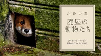 廃屋の動物たち.jpg