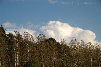 木々の上を覆う 白い大きな雲.jpg