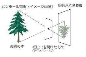 樹のピンホール現象.jpg