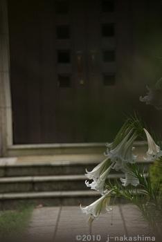 右側に百合の花8本.jpg