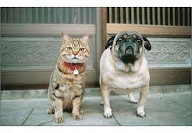 猫と犬2.jpg