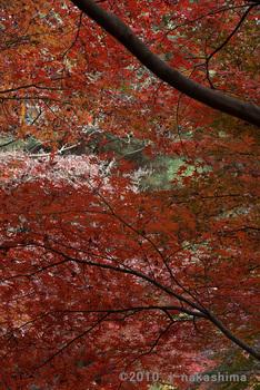 紅葉のカーテン.jpg